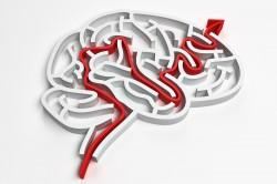 OCD Brain maze solution